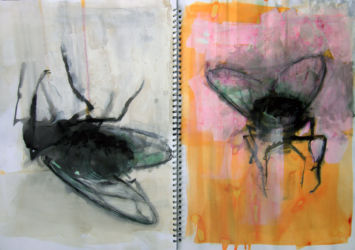 Fly Paintings